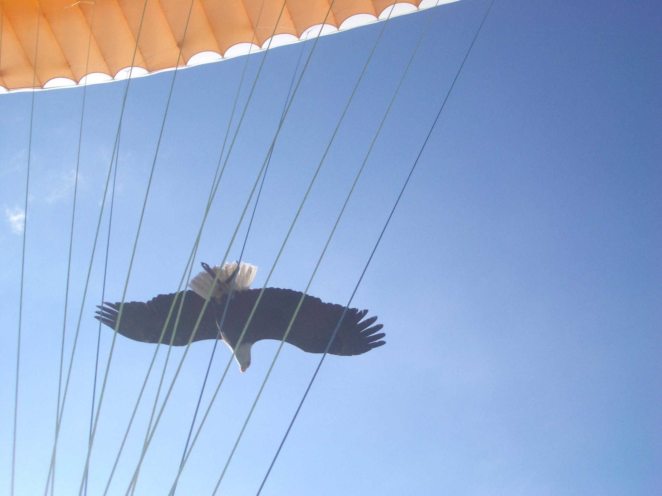 L ecole de parapente qui réaprend a voler aux aigles