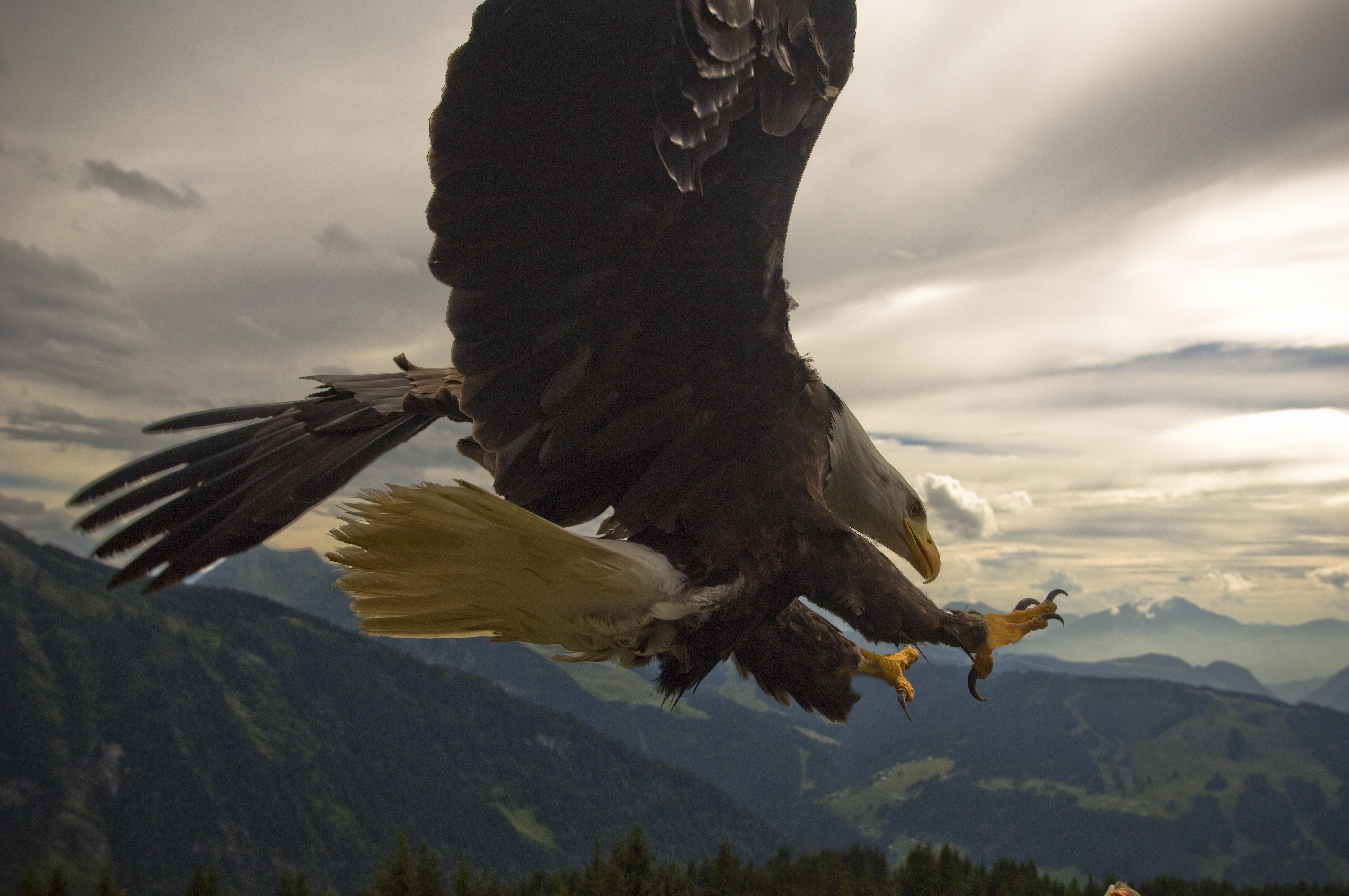 vol avec les aigles